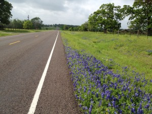 Bluebonnets on Hwy 2562